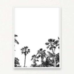 Palms BW Wall Art Print