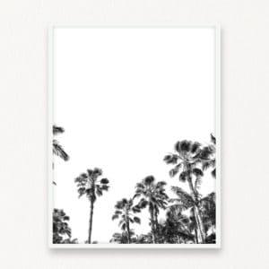 HxD-TropicalPalmsBW-lrg