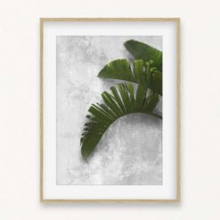 Banana Leaf on Wall Wall Art Print