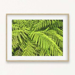 Green Fern Wall Art Print