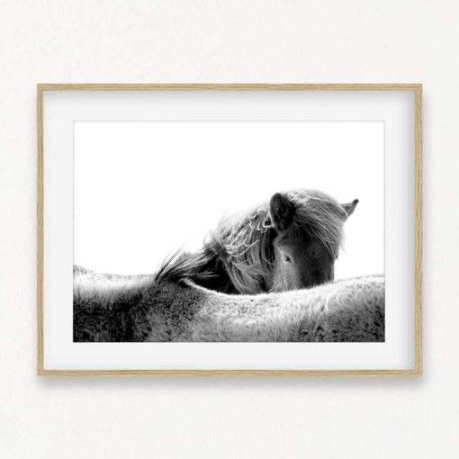 Horse Head Wall Art Print