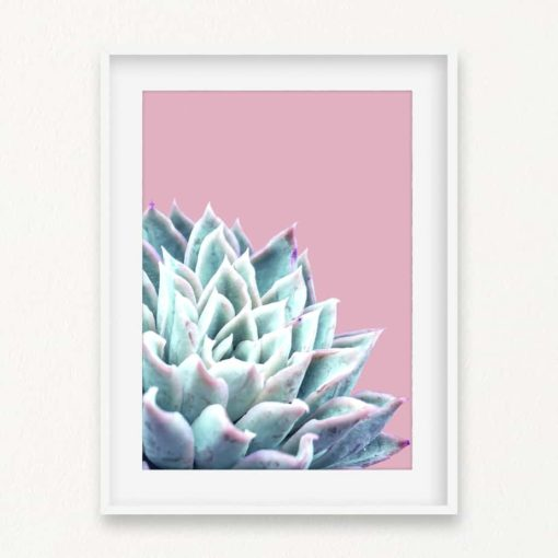 Succulent on Pink Wall Art Print