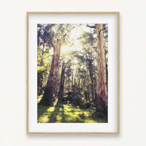 The Woods Wall Art Print