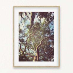 Treetops Wall Art Print