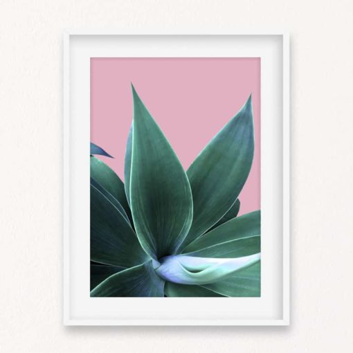 Agave on Pink Wall Art Print