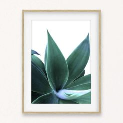 Agave on White Wall Art Print
