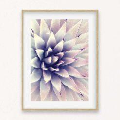 Agave Pink Wall Art Print
