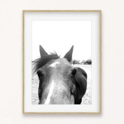 Horse Face Wall Art Print