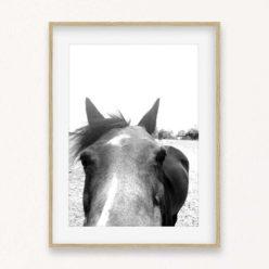 Horse Face Wall Art Print