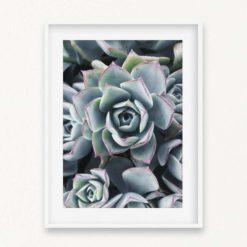 Succulents Wall Art Print