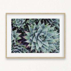 Succulents II Wall Art Print