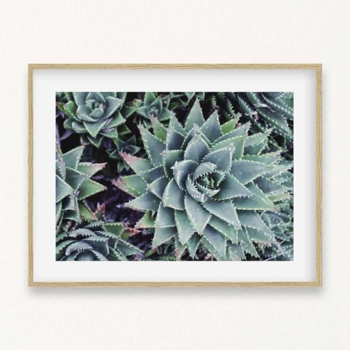 Succulents II Wall Art Print