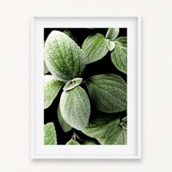 Leaves Wall Art Print