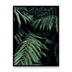 Ferns Wall Art Print
