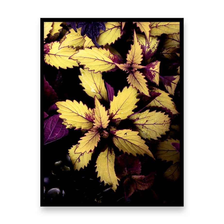 Leaves II Wall Art Prints