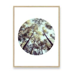 Looking Skyward Wall Art Print