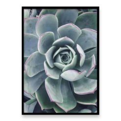 The Succulent Wall Art Print