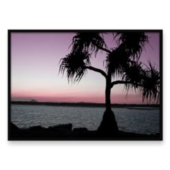 Sunset Palm Wall Art Print