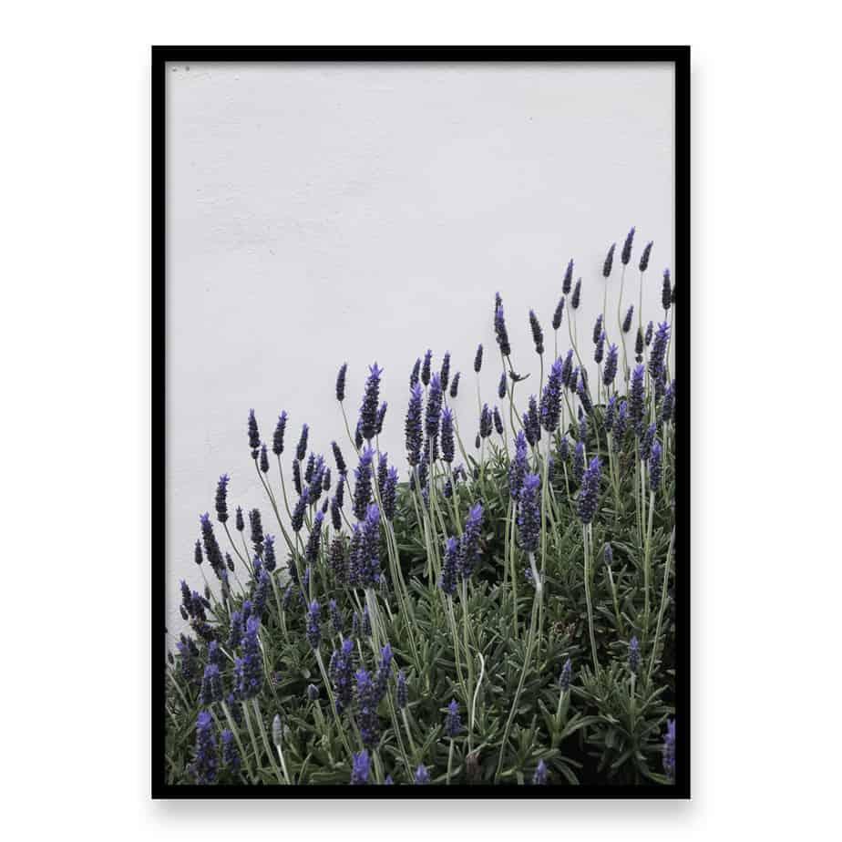 Lavender Wall Art Print