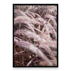 Pink Grass Wall Art Print