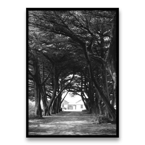 Through the Trees Wall Art Print