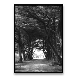 Through the Trees Wall Art Print