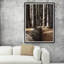 Fallen tree wall art print
