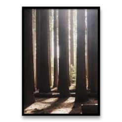 Light Through The Trees Wall Art Print