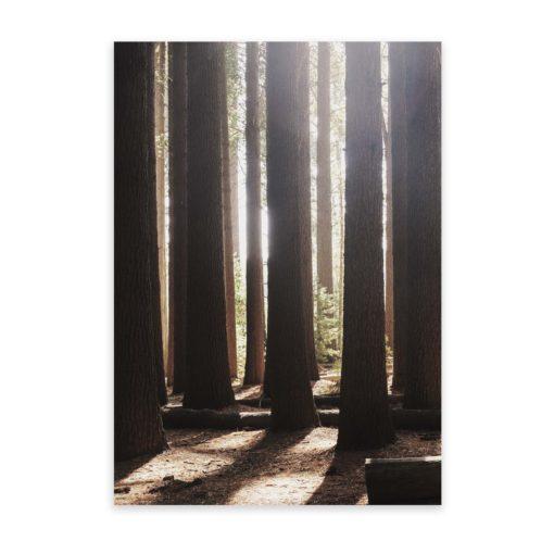 Light Through The Trees Wall Art Print