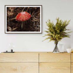 Red Mushroom (Fly Agaric Mushroom) Wall Art Print