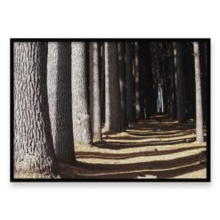 Forest Walk Wall Art Print