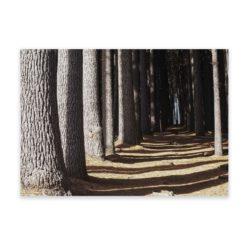 Forest Walk Wall Art Print