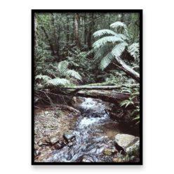 Forest Stream Wall Art Print