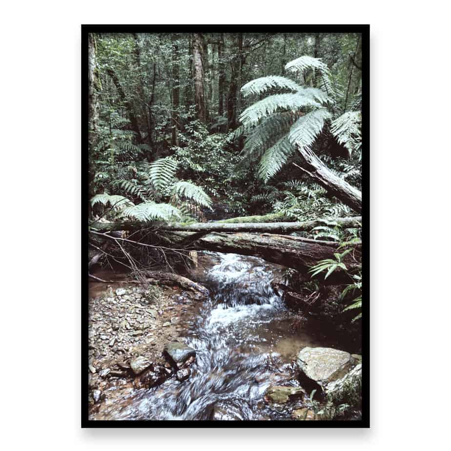 Forest Stream Wall Art Print