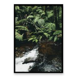 Forest Stream II Wall Art Print