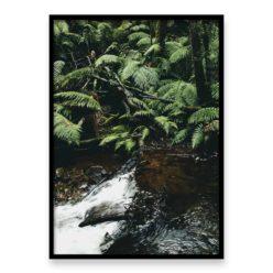 Forest Stream II Wall Art Print