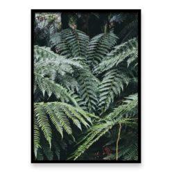 forest ferns wall art print