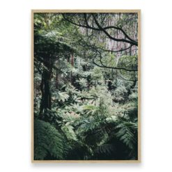 Forest Side II Wall Art Print