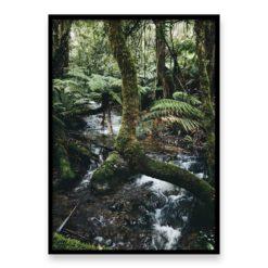 Forest Stream III Wall Art Print