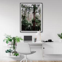 Mossy Trees Wall Art Print