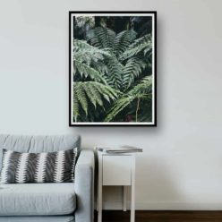 forestferns framed insta