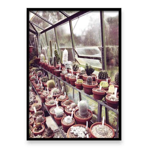 cactus house 2