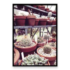 Cactus House 3