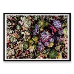 Succulent bloom