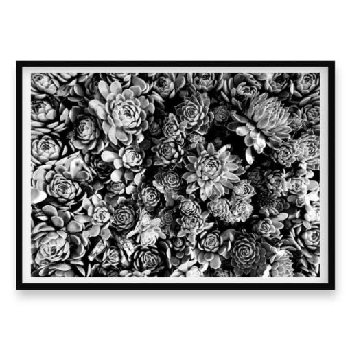 Succulent Bloom BW Wall Art Print