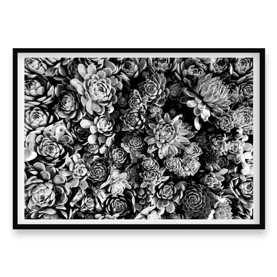 Succulent Bloom BW Wall Art Print