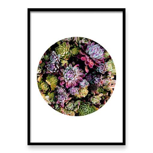 succulent circle wall art print