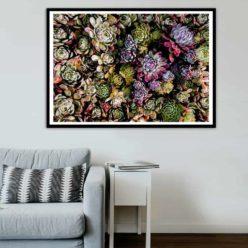 SucculentBloom framed insta