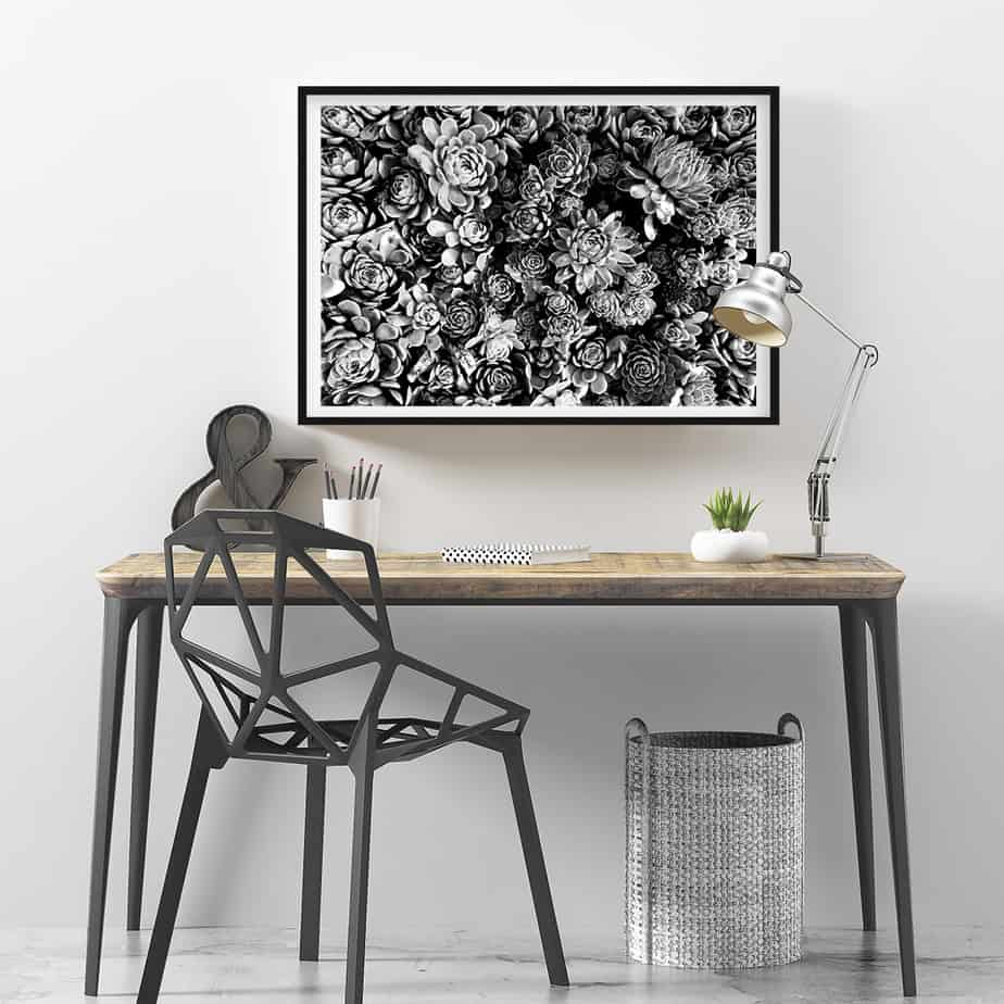 succulent bloom bw wall art