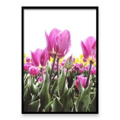 Wall Art Print Pink Tulips